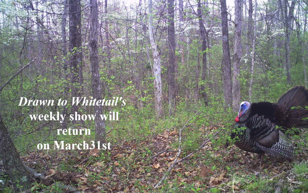 Weekly Shows Return March 31, 2016