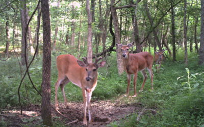 The Trail Camera Show