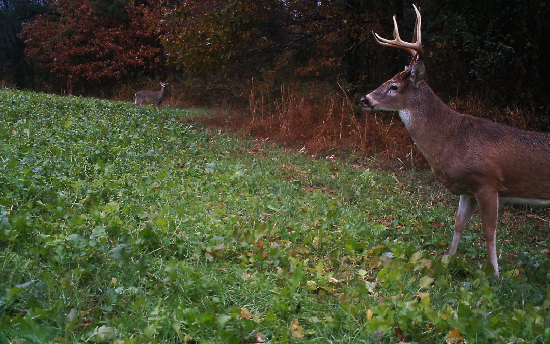 Deer Hunting Report 11.23.17