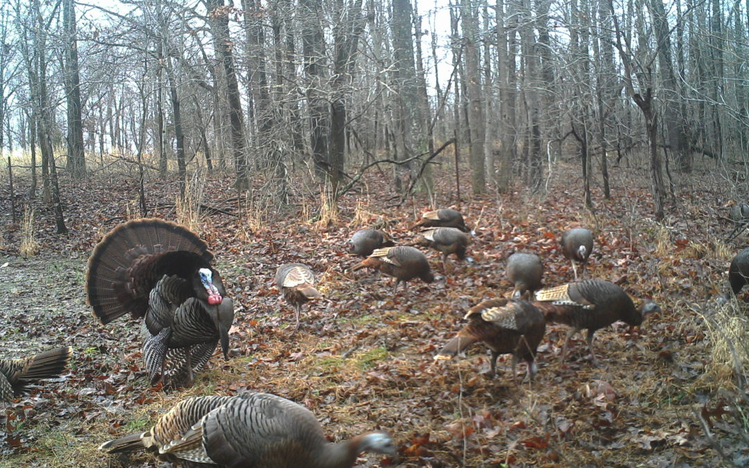Turkey Hunting Report (3.27.19)