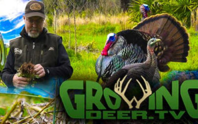 Turkey Talk with Dr. Grant Woods